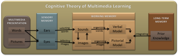 Picture showing that processing information goes from the Multimedia presentation, enters the brain through sensory memory of ears and eyes, into working memory, and finally to long-term memory.