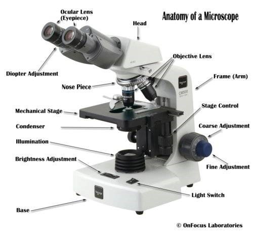 Microscope with parts labeled